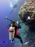 Alex taking pictures of Maz on the Elphinstone reef