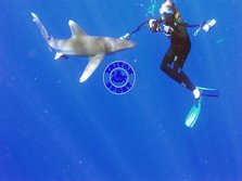 Alex gettiing friendly with an oceanic white tip