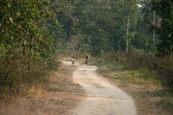 Maz cycling round the Royal Chitwan National Park