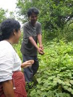 Somsak showing Anchalee around the plantation fields