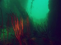 A blaze of colour within the murk of the wreck