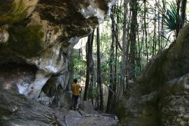 Batu Cermin caves with tree roots