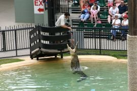 Crocodile show at Australia Zoo