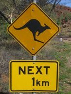 Watch out for those kangaroos